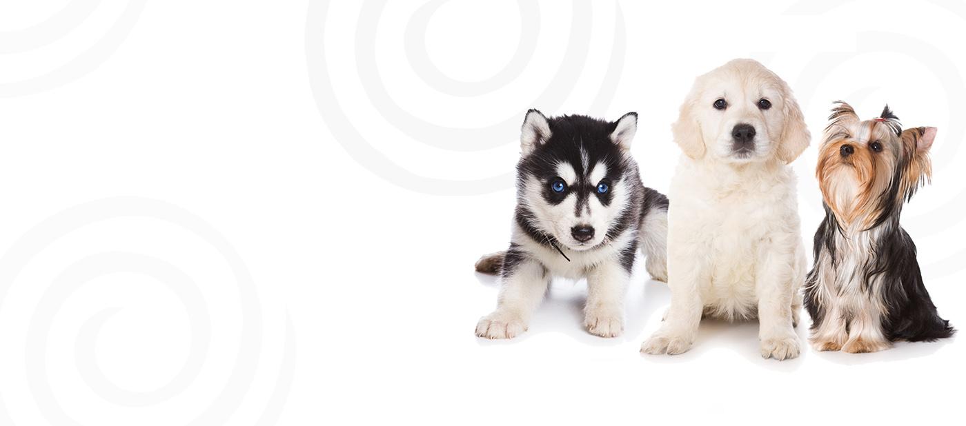 Petland puppies banner