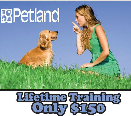 Dog Training & Obedience Courses - Petland Frisco, Texas