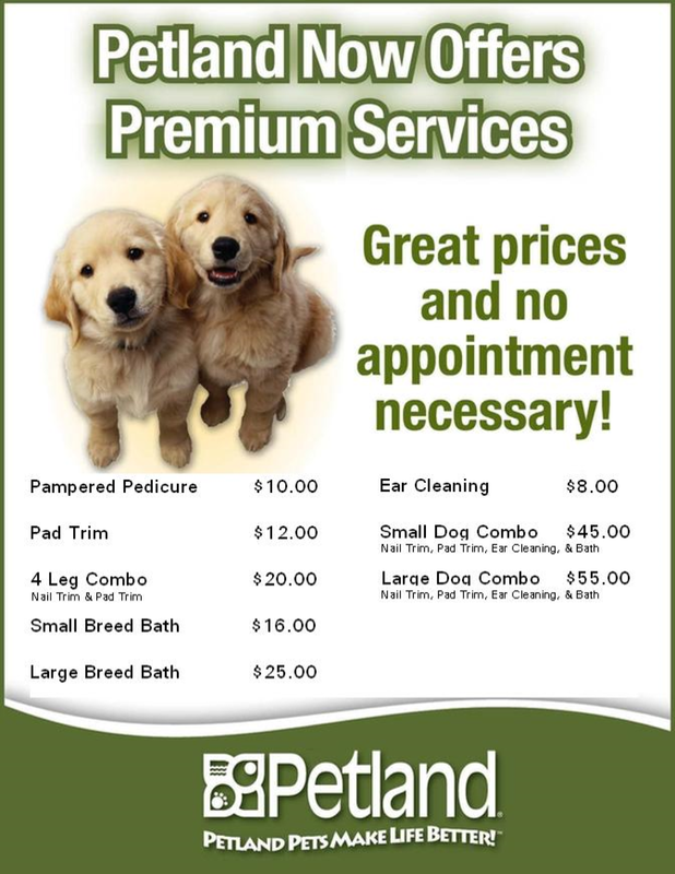 Premium Dog Grooming Services Petland Frisco Texas
